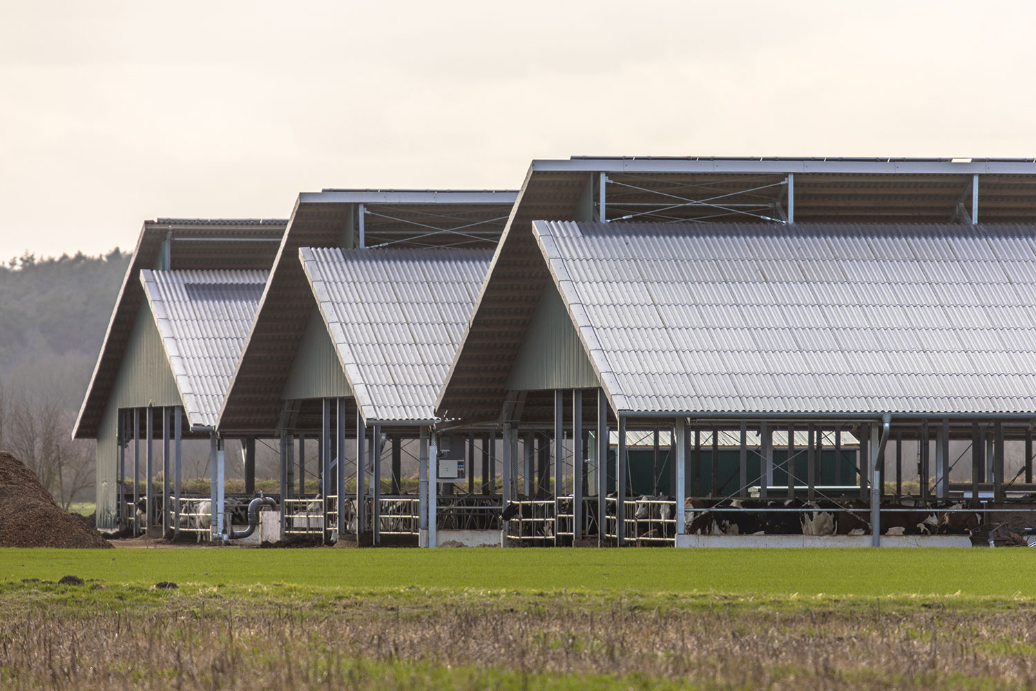 three-giant-barns-at-factory-farm-V7KFXDS.jpg