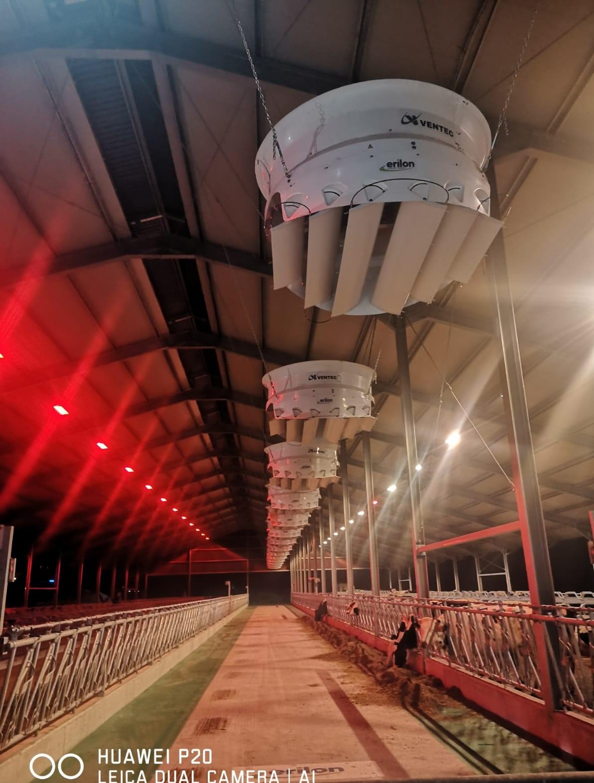 cavalli-illuminazione2.jpeg